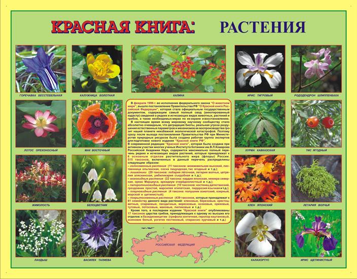 Растения приносящие здоровье как